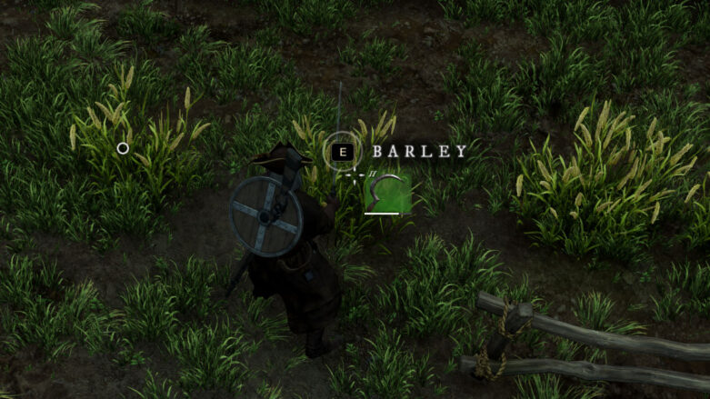 Example of the Barley plant in New World